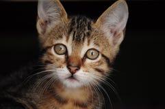 Gattino con fondo scuro Fotografia Stock Libera da Diritti
