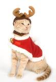 Gattino con i antlers Fotografia Stock