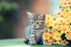 Gattino con i fiori fotografia stock