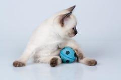 Gattino con la sfera Fotografia Stock Libera da Diritti