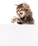 Gattino con lo spazio in bianco immagini stock libere da diritti