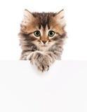 Gattino con lo spazio in bianco Fotografie Stock