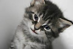 Kitty con un sorriso immagini stock