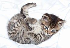 Gattino in coperta Fotografie Stock