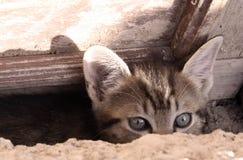 Gattino curioso Fotografie Stock Libere da Diritti