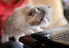 Gattino curioso Fotografie Stock