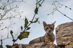 Gattino curioso che sta su una parete circondata dai fiori gialli selvaggi fotografia stock libera da diritti