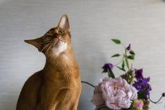 Gattino curioso con un vaso dei fiori fotografia stock
