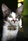 Gattino curioso vedere le macchine fotografiche leggere Fotografia Stock