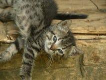 Gattino del bambino che prende un pelo Fotografia Stock Libera da Diritti