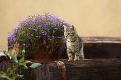 Gattino del fiore Fotografia Stock