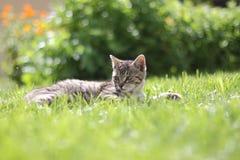 Gattino del giardino Fotografie Stock