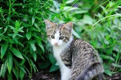 Gattino del giardino Fotografia Stock
