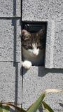Gattino del prigioniero fotografie stock