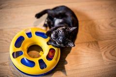 Gattino del ritratto Fotografia Stock Libera da Diritti