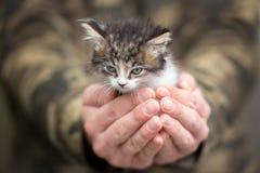 Gattino del soriano che è tenuto nelle armi del proprietario fotografie stock