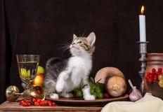 Gattino del soriano che si siede e che gioca in un piatto dell'argilla su un backg scuro fotografia stock libera da diritti