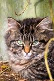 Gattino del soriano di sonno Fotografie Stock Libere da Diritti