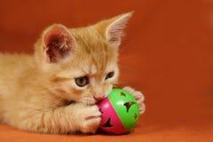 Gattino del Tabby immagini stock