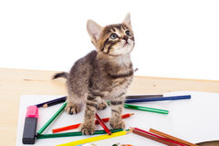 Gattino del Tabby sulla tabella con le matite Fotografie Stock