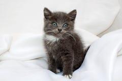 Gattino del ute del ¡ di Ð Fotografia Stock Libera da Diritti