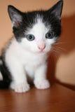 Gattino delizioso immagini stock