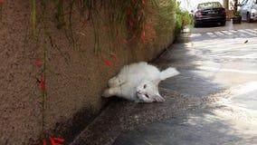Gattino della parete laterale Immagine Stock
