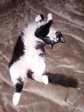 Gattino della parte superiore fotografia stock libera da diritti