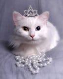 Gattino della regina Immagini Stock Libere da Diritti