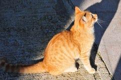 Gattino dello zenzero in un'ombra ed in una luce Immagine Stock