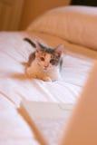 Gattino di affari Fotografie Stock