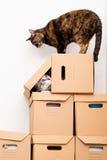 gattino di conquista Fotografie Stock Libere da Diritti