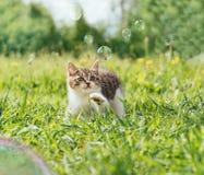 Gattino di curiosità che gioca con le bolle di sapone fotografia stock libera da diritti