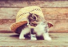 Gattino di curiosità sotto il cappello immagini stock