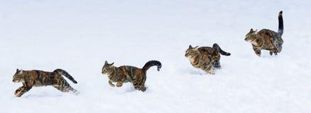 Gattino di funzionamento e di salto di fase su neve Immagini Stock Libere da Diritti