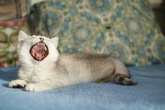 Gattino di imbardata Fotografia Stock