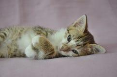 Gattino di menzogne sveglio Fotografie Stock
