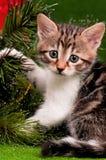 Gattino di Natale Immagine Stock Libera da Diritti