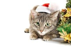 Gattino di Natale Fotografie Stock