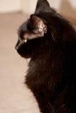 Gattino di profilo fotografia stock