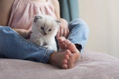 Gattino di Ragdoll con la ragazza Fotografia Stock