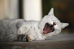 Gattino di Rockin Fotografie Stock