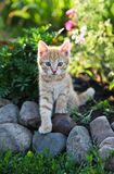 Gattino di rosso di ?ute Immagine Stock Libera da Diritti