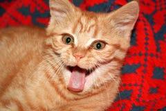 Gattino di sbadiglio Fotografia Stock Libera da Diritti