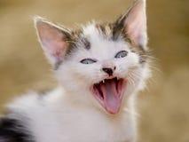 Gattino di sbadiglio sveglio Fotografia Stock
