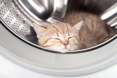 Gattino di sonno all'interno della rondella della lavanderia Immagini Stock