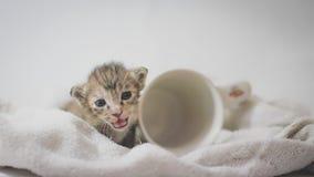 Gattino di sorriso Immagine Stock