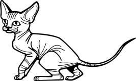 Gattino di Sphynx Fotografia Stock Libera da Diritti