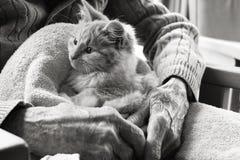 Gattino di terapia dell'animale domestico Immagine Stock