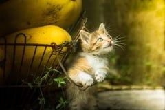 Gattino di vista Immagine Stock Libera da Diritti